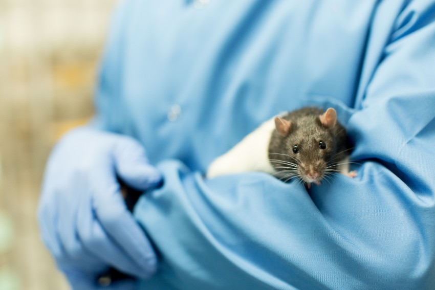 animals in research Animal research has saved lives, extended life expectancy, and improved the quality of life for both humans and animals by enabling scientists to conduct critical experiments that identified ways to prevent, treat, and cure disease.